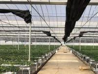 打破传统农业种植,科技兴农智慧农业引导农业未来